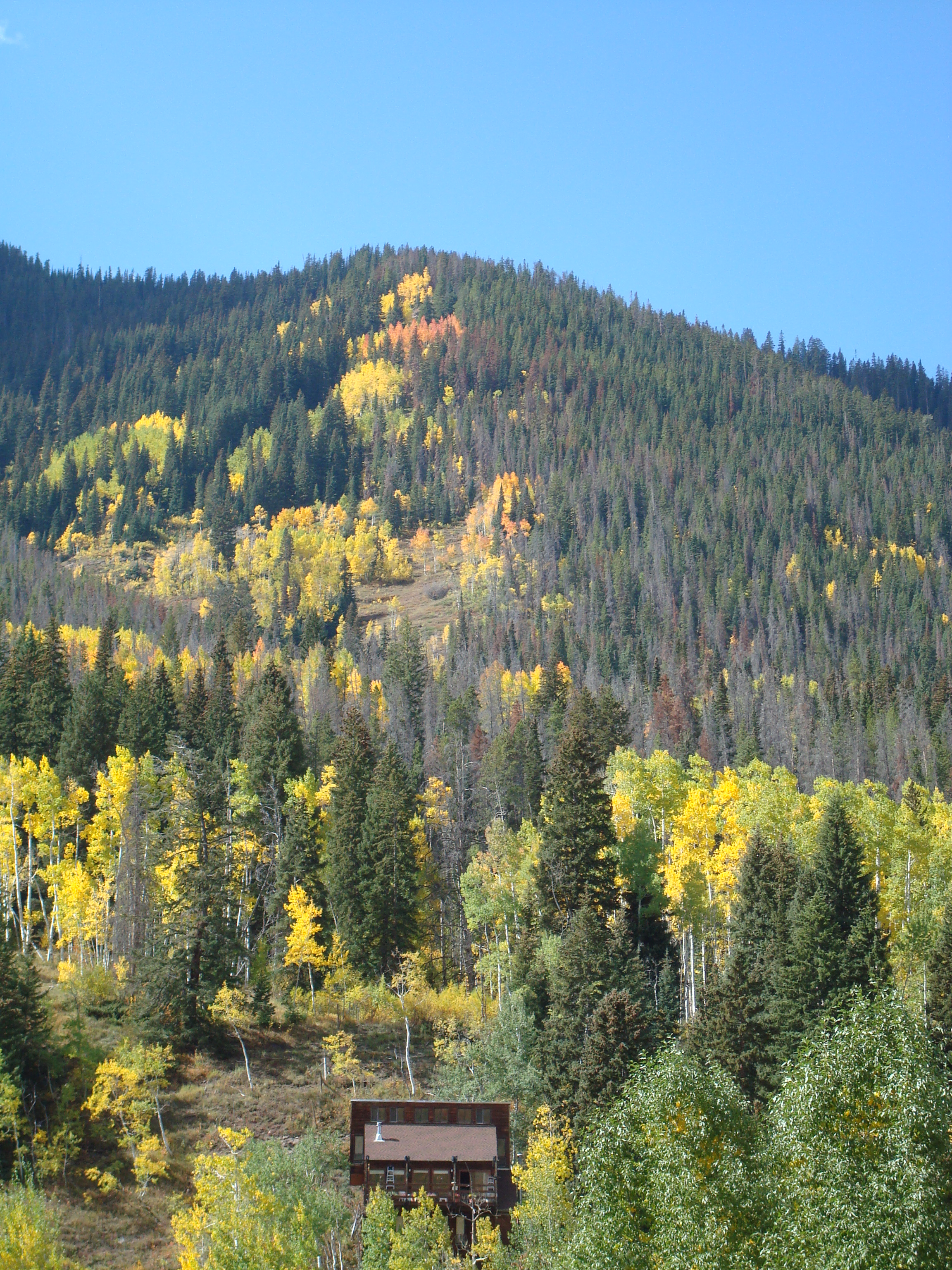 East Vail Property Backs to the White River National Forest