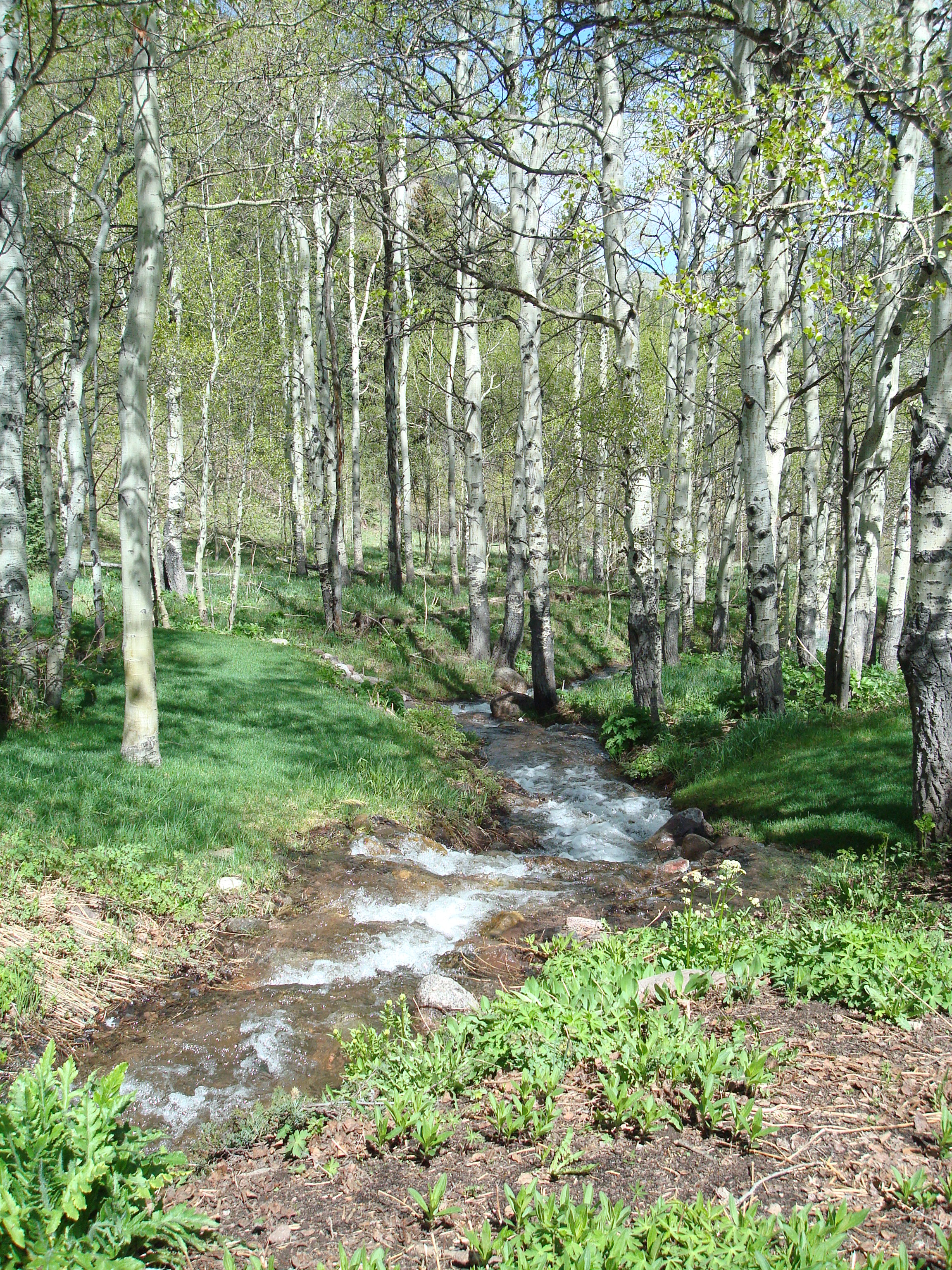 East Vail Property with Stream